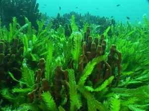 Algas marinas, longevidad, saludable
